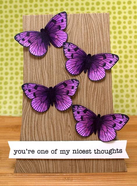 Stunning Butterflies