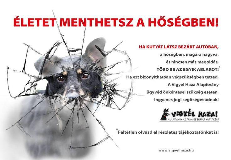 Életet menthetsz a hőségben! Jogi segítség azoknak, akik segítenek a bajbajutott kutyákon!  #kutya #dog  #hírek   #nyár #summer  #hőség #heat  #állatvédelem