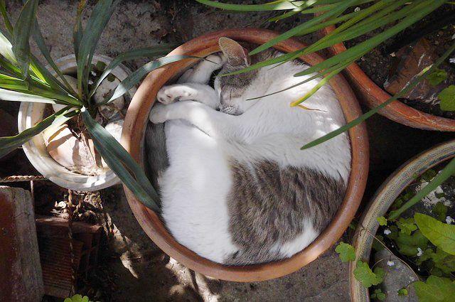 Kočky a rostliny pro kočky