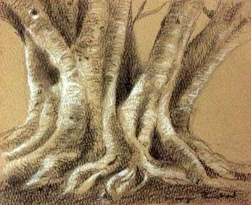 Tree trunk sketching created on hand made paper using charcoal pencil and white soft pastel pencil.