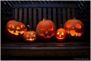 Des citrouilles d'Halloween.