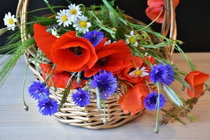 Try us to buy online flowers and gift in Delhi or you can also try to send flower to Delhi from any you can place your order for all online services of gift, flower, and cakes. You can contact us: +91 9582148141 on this no or you can visit our website: http://www.buyflower.in/ to find online and instant delivery of flowers and gift.
