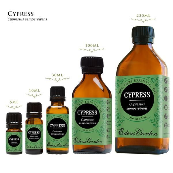 Cypress has been used to combat excessive perspiration, oily skin, and varicose veins, in addition to being a relaxing, nerve soothing essential oil.