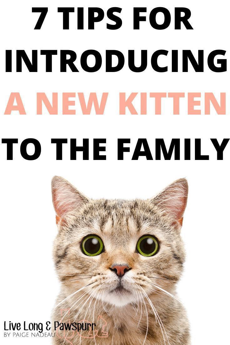 7 Helpful Tips For Introducing A New Kitten To Your Home Live Long And Pawspurr In 2020 Getting A Kitten Introducing A New Cat Cat Training