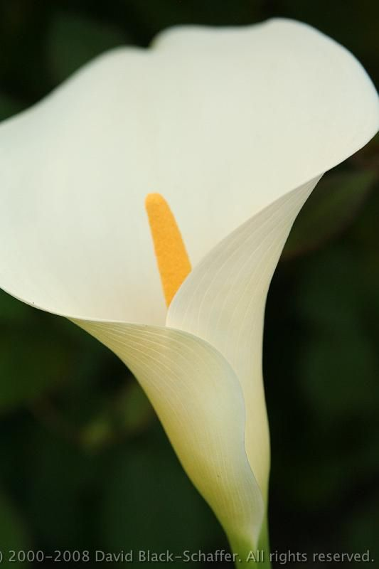 26 best white on white images on pinterest images of flowers white flowers names searchya search results yahoo image search results mightylinksfo