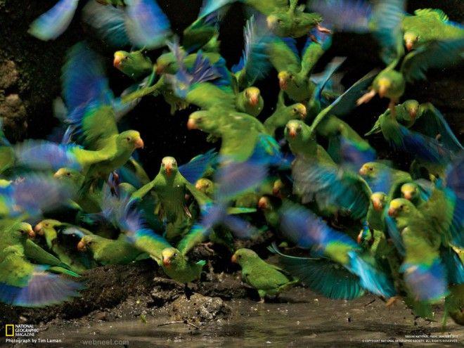 Wildlife HD Desktop Wallpapers, Wildlife HD Wallpaper | 33 HD ...