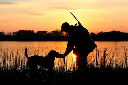 Duck Hunting At Sunset