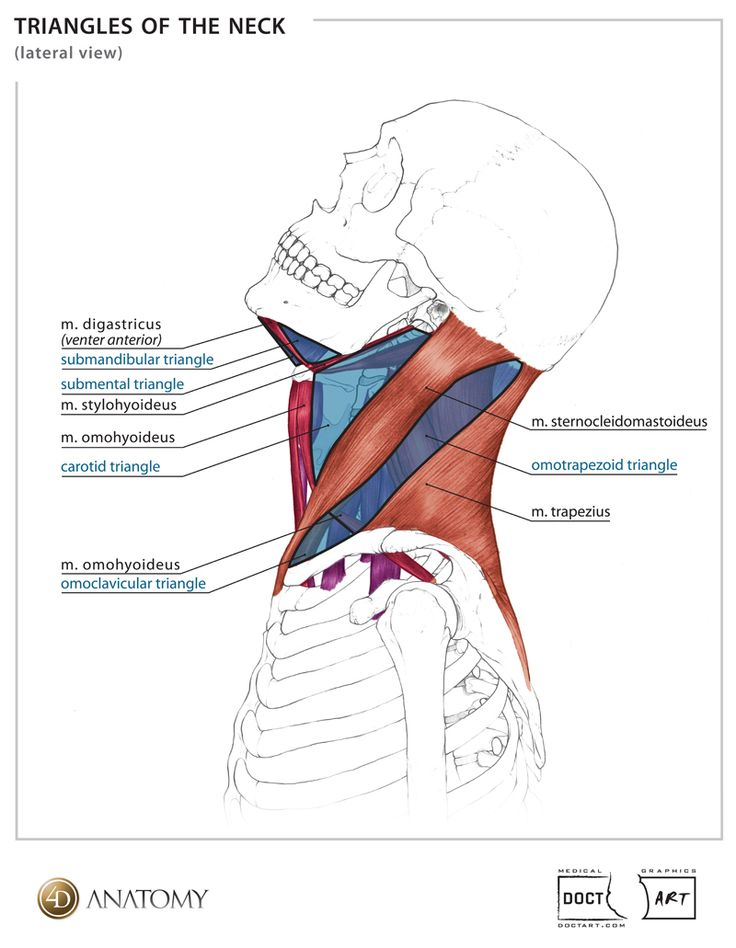 555 best Anatomy images on Pinterest | Health, Human body and Massage