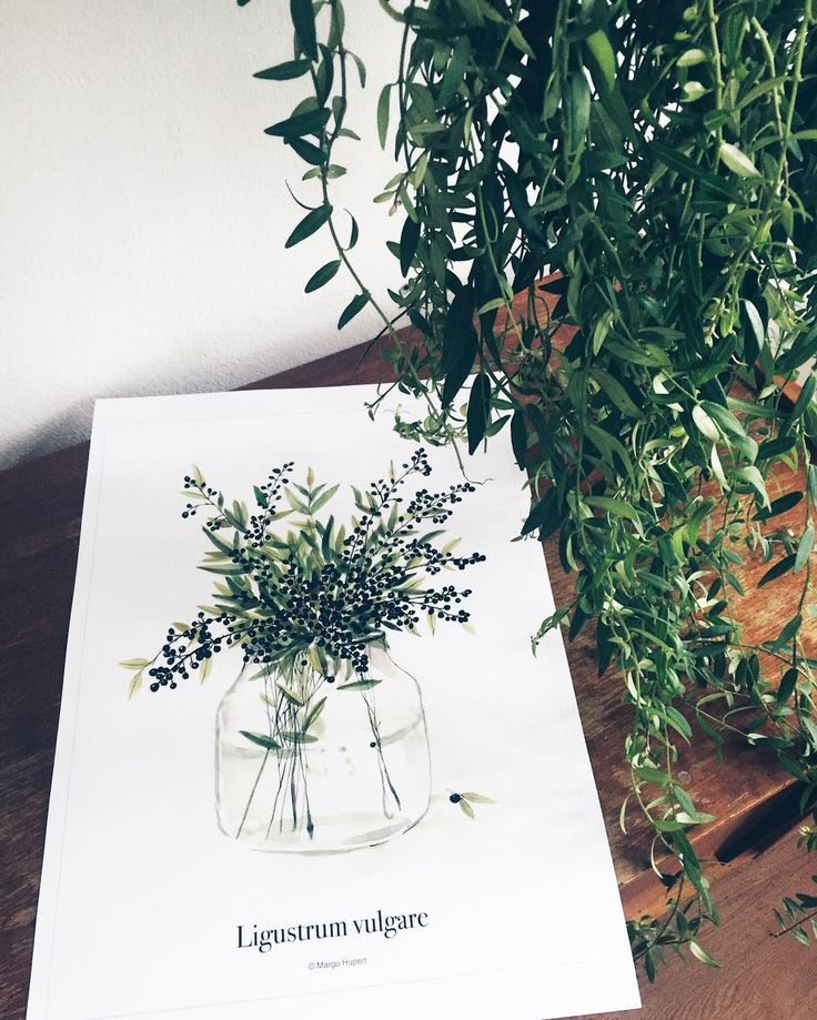 Poster • LIGUSTRUM VULGARE • 30x40 cm Contact ☺️
