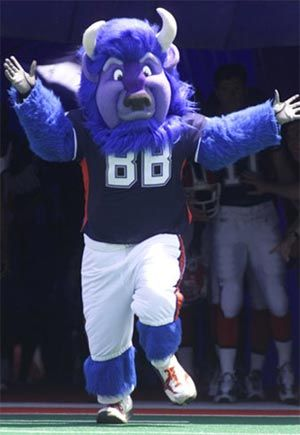 "Buffalo Bills mascot - William ""Billy"" the Buffalo. Billy made his official debut in 2000. Now residing in Ralph Wilson Stadium, this eight-foot-tall American Buffalo enjoys playing with kids, signing autographs and eating buffalo wings. He's quick to point out, however, that buffalo wings aren't made from buffalo; they just originated in Buffalo, New York."