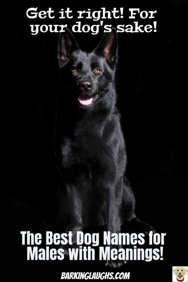 The Best Boy Dog Names List With Meanings Dog Names Boy Dog Names Black Dog Names