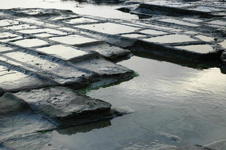 Tessellated Pavements, Eagle Hawk neck, Tasmania. The patterns on the rocks are intricate and interesting.  Bree :)