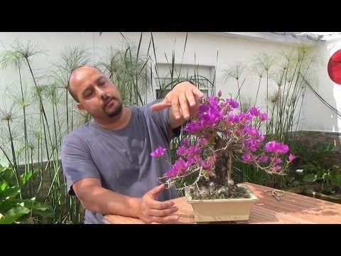 Bonsai Zero - Trasplante - YouTube