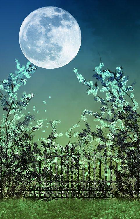 The moon has awoken, with the sleep of the sun. The light has been broken, the spell has begun. ~Midgard Morningstar #MrBowerbird
