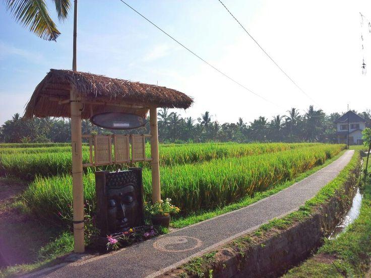 Bamboo and Water resonance