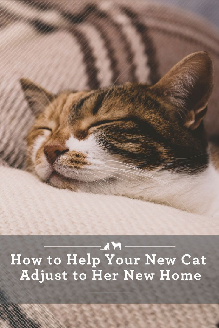 How To Help Your New Kitty Adjust To Her New Home In 2020 Cat Training Cat Care Cats