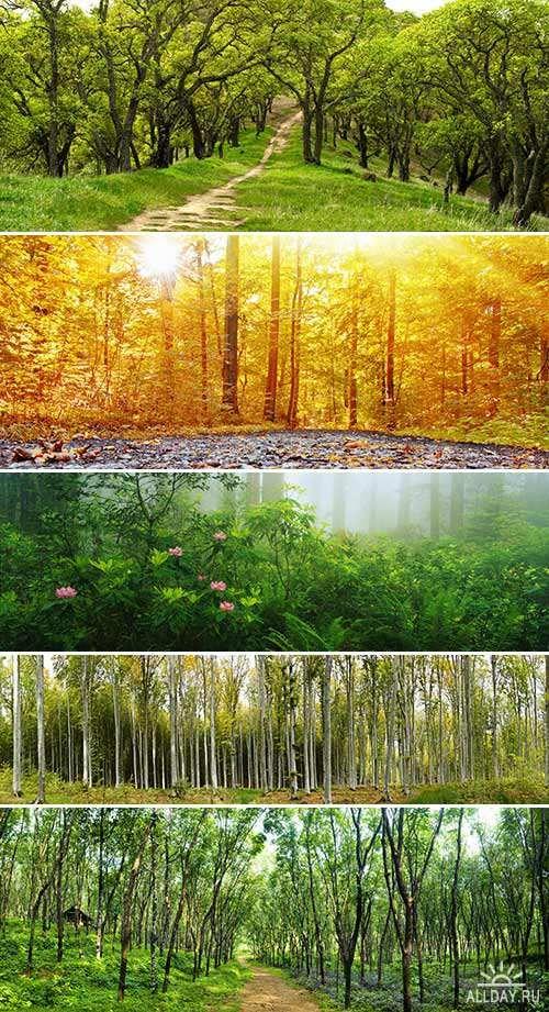 Панорамные фотографии леса 2