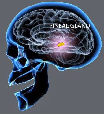 3rd eye activation... Pineal Gland... Please OVERSTAND the importance of this gland and what fluoride does to this gland as well as other so called HARMLESS products purchased in THEIR stores..(deodorant, plastic, non-stick pans, microwaves, CELL PHONES-key word:CELL!!!) it is time to awaken..Been SLEEP FOR TOO DAMN LONG!!!