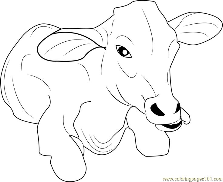 Baby Cow Coloring Pages Children Coloring Coloring Coloring Pages