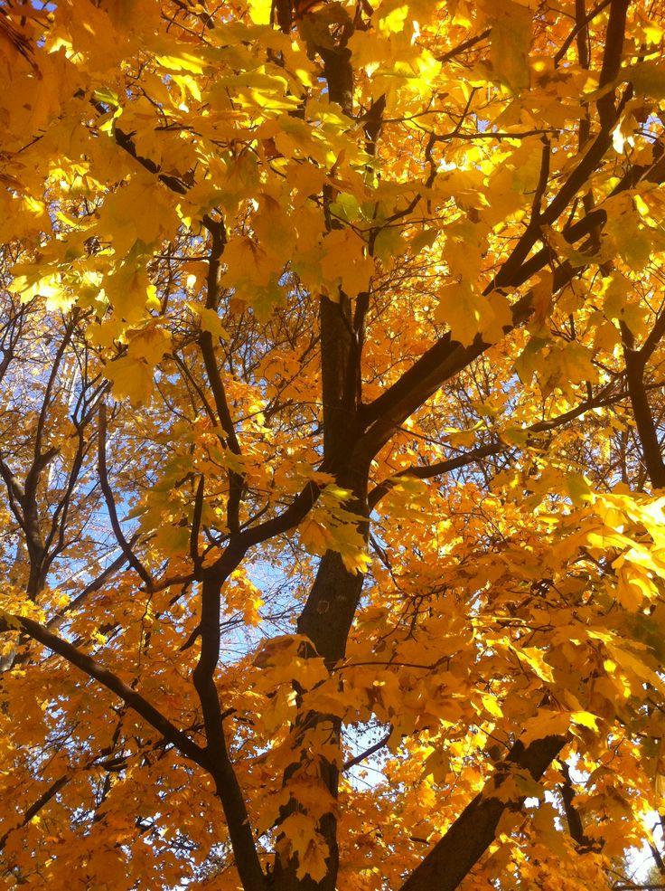 открытки картинка наступила золотая осень уже этими путёвками