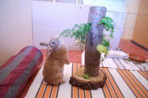 beschäftigung kaninchen