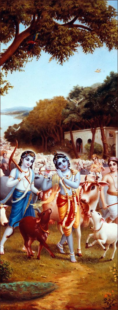 After finishing their lunch, Kṛṣṇa and His friends and calves began to return to their Vrajabhūmi homes. While passing, they enjoyed seeing the dead carcass of Aghāsura in the shape of a gigantic serpent. When Kṛṣṇa returned home to Vrajabhūmi, He was seen by all the inhabitants of Vṛndāvana. He was wearing a peacock feather in His helmet, which was also decorated with forest flowers.
