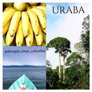 Uraba