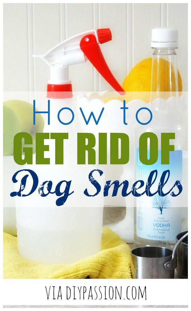 How to Get Rid of Dog Smells