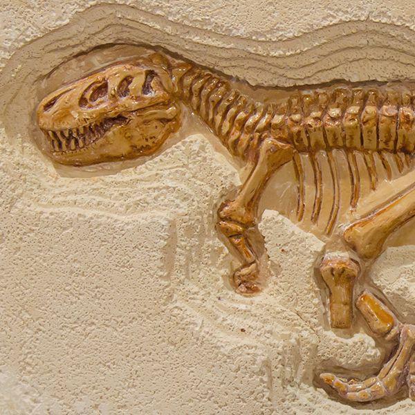 O Vale dos Dinossauros- PB é um dos mais importantes sítios paleontológicos do mundo, com mais de 50 tipos de pegadas de animais pré-históricos! Confira no blog da Gloria Pires! . #bemglo #boasideias #boaspraticas #estarbem #gloriapires #tudodebemglo #viverbem #atitudebemglo #arteecultura #cultura #arte #valedosdinossauros #dinossauros #paleontologia