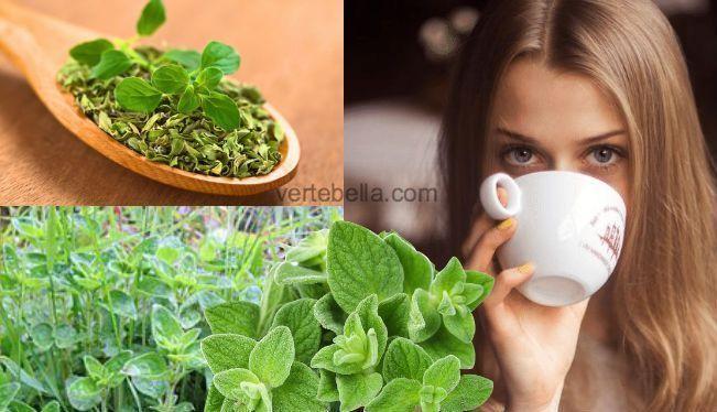 ✔️ 👌 Propiedades y beneficios del té de orégano.El té de orégano puede ser un gran aliado para la salud, su uso es poco conocido, pero sus propiedades son muy grandes. Si no lo conocías, el día de hoy te contaremos cuales son los beneficios que este té de orégano puede tener para tu salud, toma nota! …