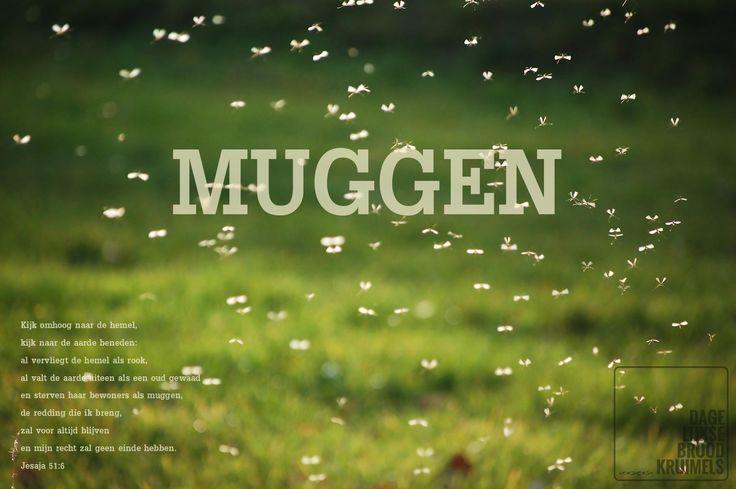 Kijk omhoog naar de hemel, kijk naar de aarde beneden: al vervliegt de hemel als rook, al valt de aarde uiteen als een oud gewaad en sterven haar bewoners als muggen, de redding die ik breng, zal voor altijd blijven en mijn recht zal geen einde hebben. Jesaja 51:6  #Hemel, #Muggen  http://www.dagelijksebroodkruimels.nl/jesaja-51-6/