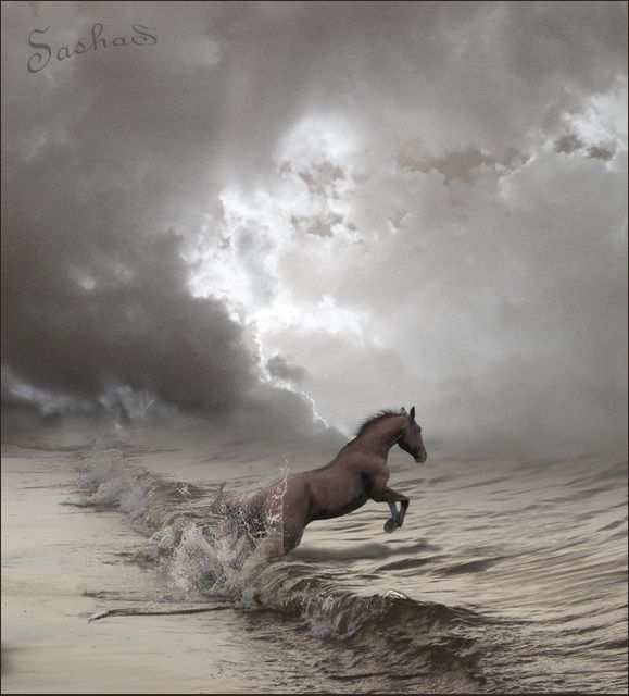 Surreal: Picture, At The Beaches, Amazing Photography, The Ocean, Funny Photo, The Waves, Hors Jumping, Animal, The Sea