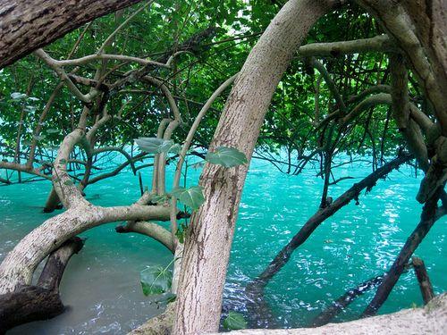 The Blue Lagoon near Port Antonio, Jamaica...So mysterious especially at night we love the Blue Lagoon