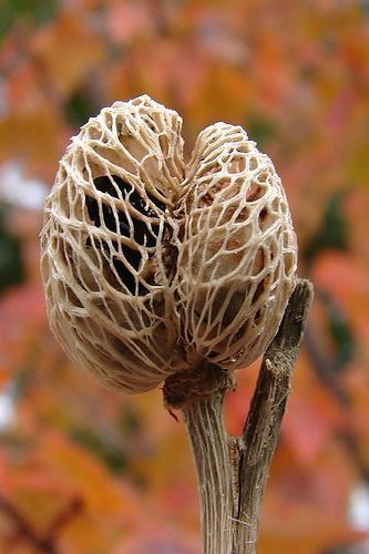 seed pod - Google Search