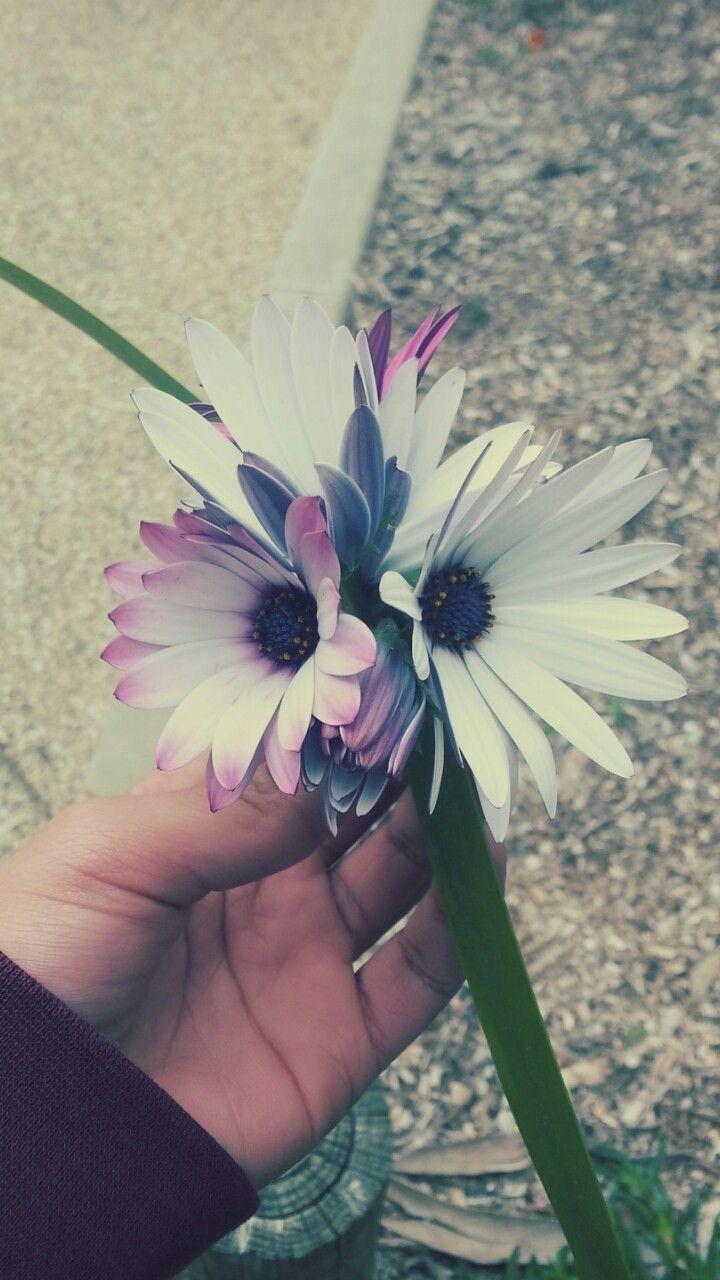 Iphone Flower lockscreen