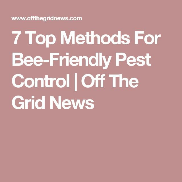 7 Top Methods For Bee-Friendly Pest Control | Off The Grid News
