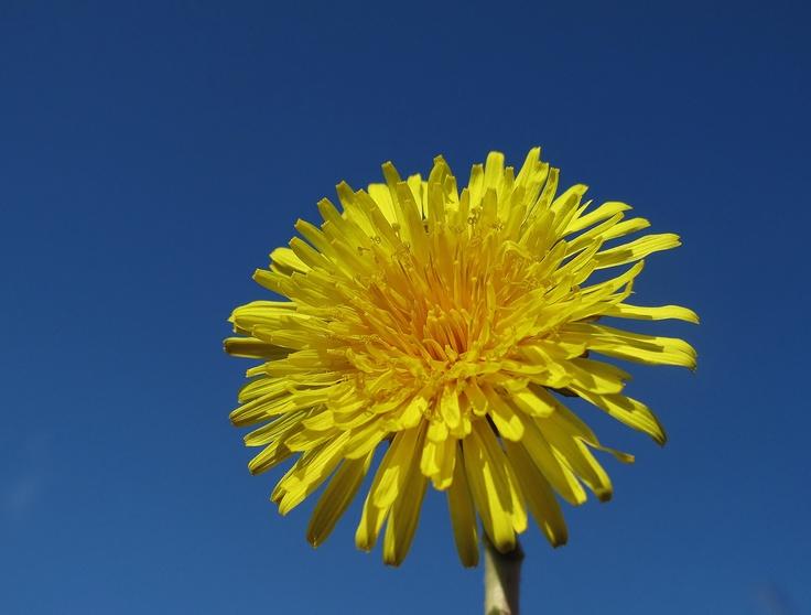 Dandy sunshine