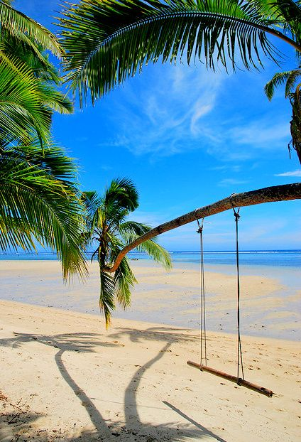 Beach Swings, Tree Swings, Palms Trees, Palm Trees, At The Beach, Us Virgin Islands, Places, Beach Life, Tire Swings