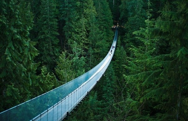 Capilano Suspension Bridge. 230 meters to the bottom of the gorge. Heavy-duty and reliable, this bridge can withstand 96 elephants. Vancouver residents advised to begin their acquaintance with the city from that bridge.
