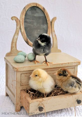 CHICKS!Miniatures Dolls, Easter, Vintage Jewels, Dressers, Baby Animal, Vintage Furniture, Baby Chicks, Buff Orpington, Baby Stuff