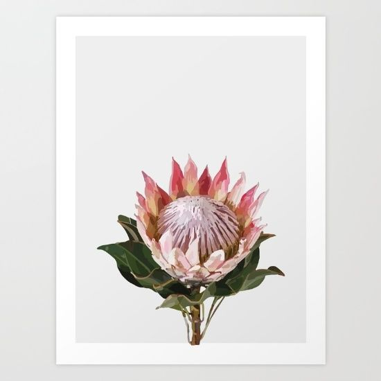 Buy Lone king protea Art Print by Pilbouzas. Worldwide shipping available at Society6.com. Just one of millions of high quality products available.