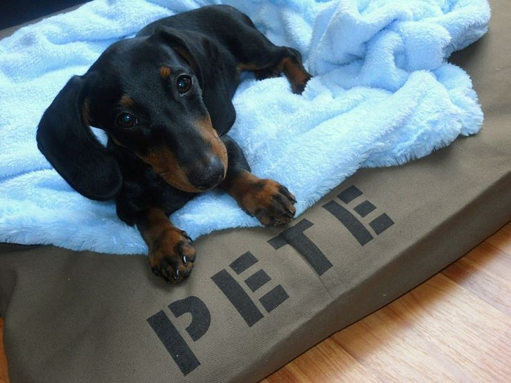 Dog Pet Bed Duvet Cover  Stuff with sleeping pillows by BowWowBeds, $27.00
