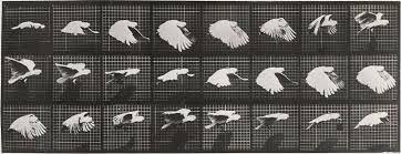 Image result for etienne-jules marey bird fly