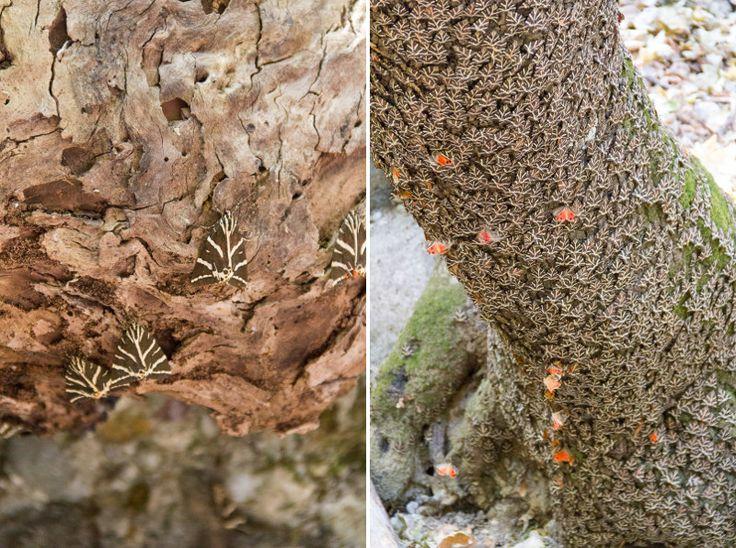 Pétaloudès, la Vallée des Papillons {Rhodes Island Guide}