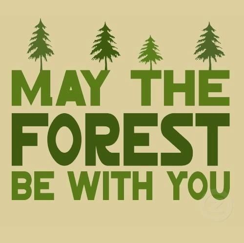May the forest be with you. Happy #EarthDay! Tap to see more inspirational quotes, save & love the mother Earth. - @mobile9