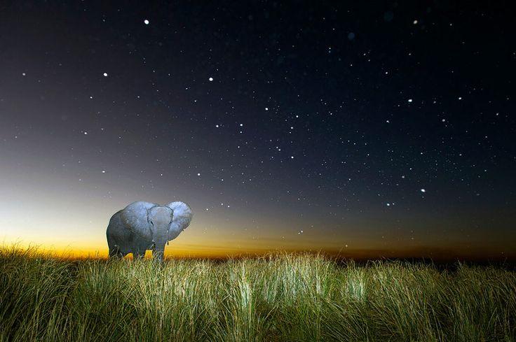 14 Potret menakjubkan alam liar Afrika di malam hari luar biasa!