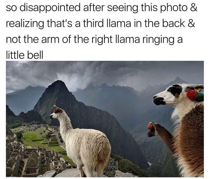 Best 25 Baby Llama Ideas On Pinterest: Best 25+ Llamas Ideas On Pinterest