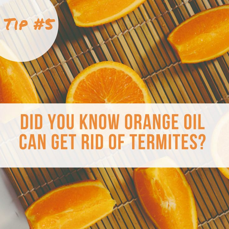 Deeming on the type of termites you have orange oil might just be a great alternative to chemical tenting. You can use it to get ride of termites and other bugs around the house but you can also check your local termite tenting service and ask if they you orange oil to take care of bigger issues.  So all in all, orange oil is pretty darn cool. You can get is for only $29.99 and keep it handy around the house.