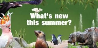 What's new this summer web700