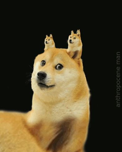 wow doge gif =D this is the best, I think I've never laughed so hard!  (GIFAnime)